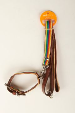 Leash and multicolor elastic collar with leather bottom and border