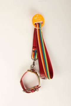 Leash and multicolor elastic collar with red leather bottom and border